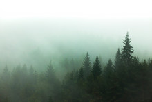 Fog And Mist In The Forest. Tr...