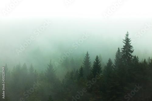mgla-i-mgla-w-lesie-drzewo