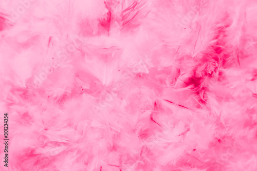 Beautiful abstract colorful pink and purple feathers on dark background and soft white red feather texture on white pattern - 301234354