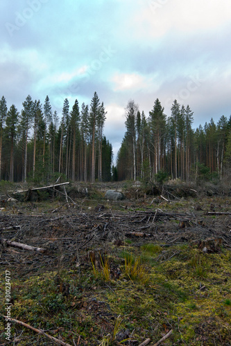 Photo Stumps and felled trees indicate that over-exploitation leads to deforestation