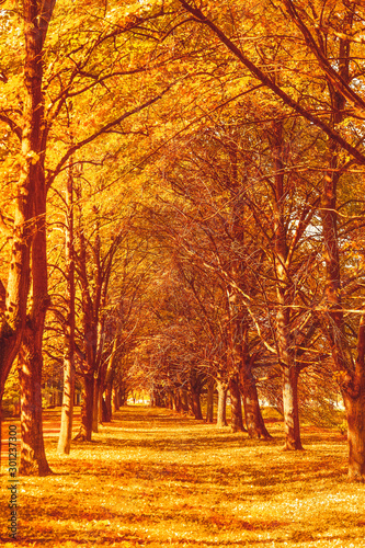 Foto auf Leinwand Rot kubanischen Beautiful autumn landscape background, vintage nature scene in fall season
