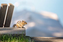 Chipmunk Sitting On Ledge