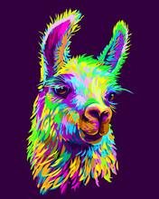 Alpaca / Llama Portrait. Abstr...