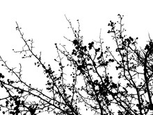 Tree Branch Silhouette. Vector
