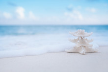 White Starfish On White Sand B...