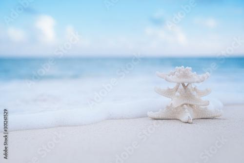 Fototapeta white starfish on white sand beach, with ocean sky and seascape