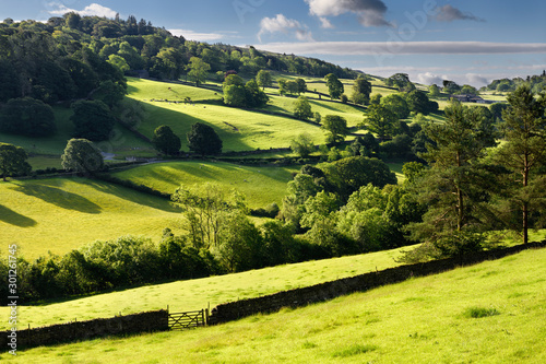 Fotografía Bright green pastureland for cows and sheep in morning sunlight with drystone fe