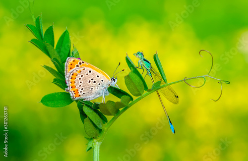Tuinposter Vlinder Beautiful butterfly sitting on flower in a summer garden