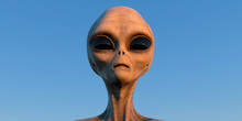Grey Alien Extremely Detailed ...