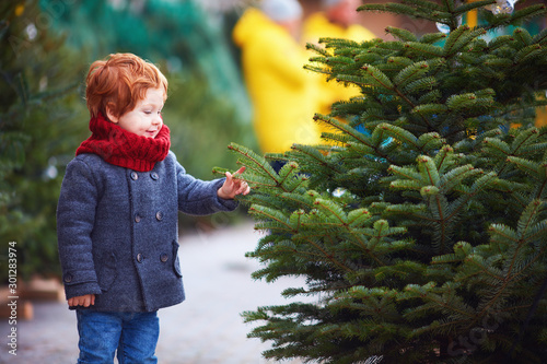 Carta da parati  happy curious little boy touching the needles on spruce at the christmas tree ma