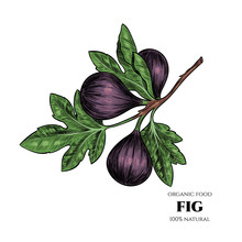 Vector Background With Figs. H...