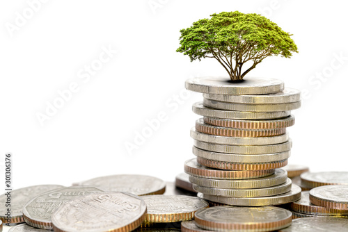 Cuadros en Lienzo  piles of coins and tree on white background,economic growth concept