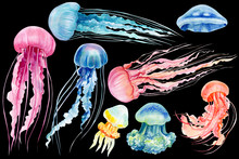 Set Of Jellyfish On An Isolate...