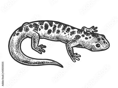 Salamander lizard animal sketch engraving vector illustration Tableau sur Toile