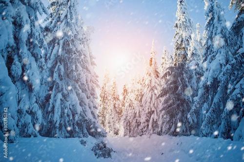 Foto auf Gartenposter Himmelblau Beautiful winter snowy landscape, forest