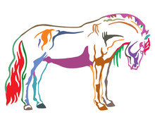 Colorful Vector Horse 2