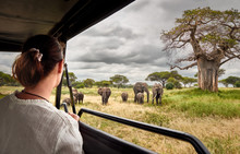 Woman On An African Safari Travels By Car With An Open Roof And Watching Wild Elephants