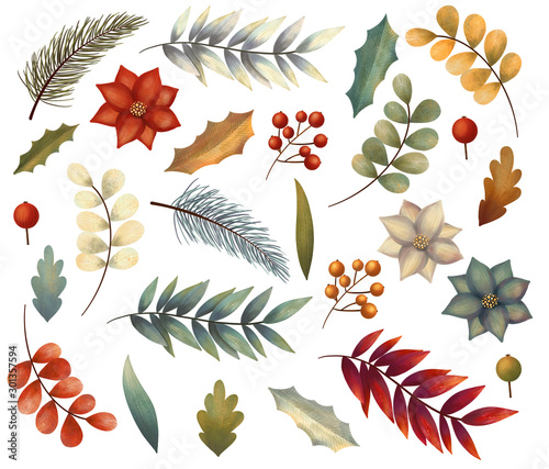 Christmas winter set of elements with flowers, leaves,  branch, berries, poinsettia. Hand drawn illustration. Wall mural