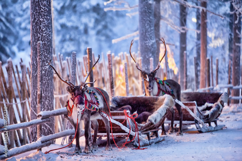 Reindeer with sledge in winter forest in Rovaniemi, Lapland, Finland Canvas-taulu