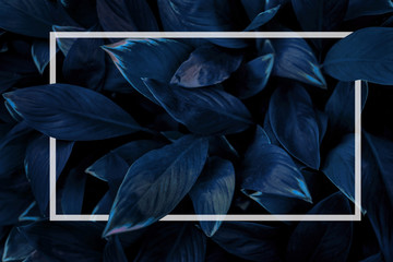 Leaf concept, blue abstract texture with white frame, natural background, tropical leaves in Asia and Thailand
