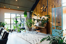 Midcentury Modern Scandinavian Eco Lodgle Like Interior With A Lot Of Green Plants And Barn Wood Walls. Piano Visible.