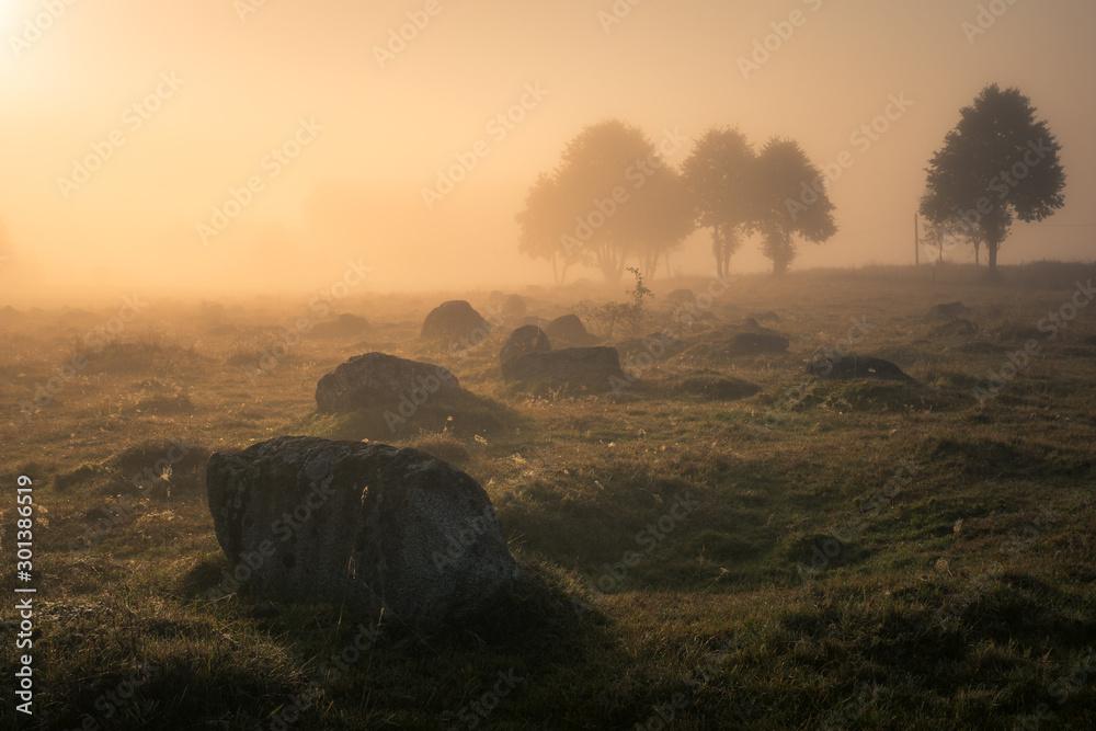 Fototapety, obrazy: Foggy morning in the Glazowisko Rutka nature reserve in Suwalski Landscape Park, Podlaskie, Poland
