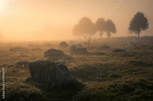 Obraz Foggy morning in the Glazowisko Rutka nature reserve in Suwalski Landscape Park, Podlaskie, Poland - fototapety do salonu