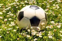 Ball On The Flowers Of Daisies...
