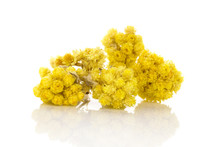 Immortelle Plant Isolated On W...