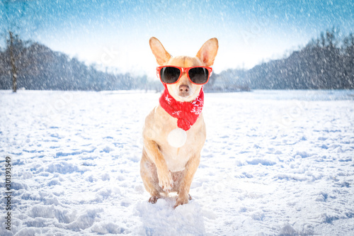 Papiers peints Chien de Crazy freezing icy dog in snow