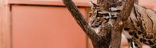 Panoramic Shot Of Leopard Stan...