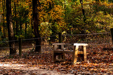 Waiting  In Forest-Seunreung ,...