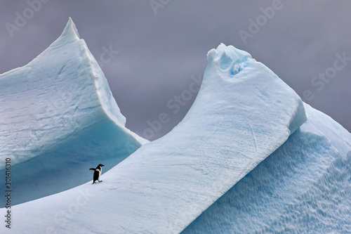 Deurstickers Grijs Adélie Penguin on Steep Iceberg