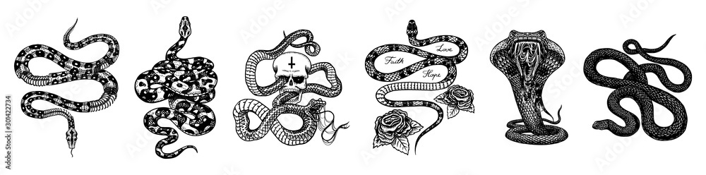 Fototapeta Vintage snake set. Skeleton royal python with skull and roses, milk reptile with sword, Venomous Cobra. Poisonous Viper for poster or tattoo. Engraved hand drawn old sketch for t-shirt or logo.