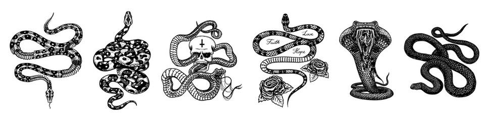 Vintage zmija set. Kostur kraljevski piton s lubanjom i ružama, gmaz s mlijekom, mač, Otrovna kobra. Otrovna poskok za poster ili tetovažu. Gravirana ručno nacrtana stara skica za majicu ili logotip.