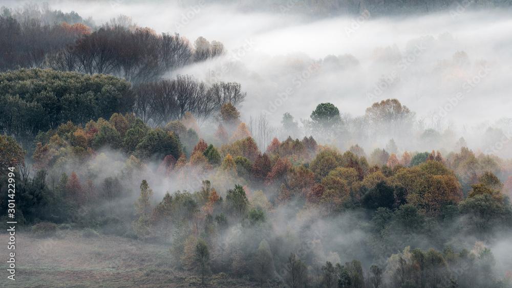 Fototapeta Wonderful sunrise among the foggy forest