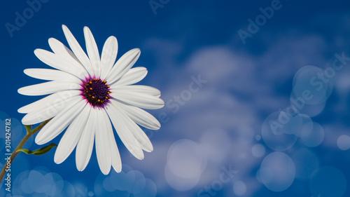 Fototapeta  flores blanca con el cielo de fondo