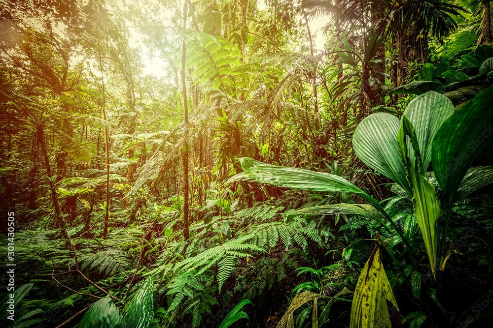 Fototapeta Sun shining over Basse Terre jungle in Guadeloupe