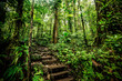 Leinwandbild Motiv Steps in Basse Terre jungle