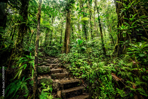 Steps in Basse Terre jungle - 301430914