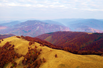 Fototapeta Góry Autumn mountains and red beech forest in the Carpathian mountains, Ukraine. Aerial drone view on beautiful mountain landscape at sunrise