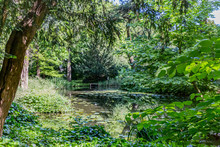 Pond With Water Lilies Surrounded By Trees And Green Vegetation In Schoonoord Park, Sunny Spring Day In Rotterdam In The Netherlands Holland