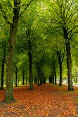 City park in Eindhoven, autumn, Netherlands. Nature.