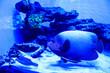 canvas print picture - sea fish