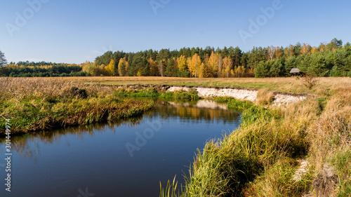 Piękna polska złota jesień, Dolina Górnej Narwi, Podlasie, Polska - 301449974
