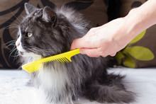 Women's Hand Brushes Fluffy Cat