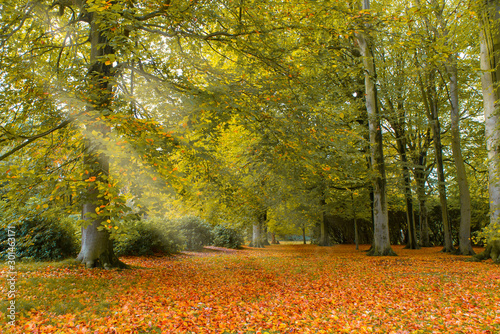 Fototapeten Natur Autumn in Holland