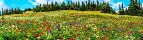 Fotografie, Obraz  Hiking through the alpine meadows filled with abundant wildflowers