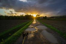 La Quiete Dopo La Tempesta Con Cane
