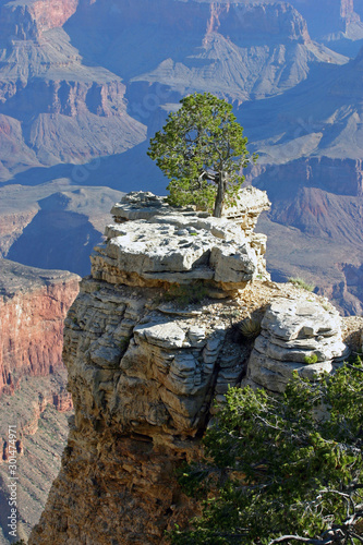 Lone Tree Growing High On a Grand Canyon Rock Formation Canvas-taulu